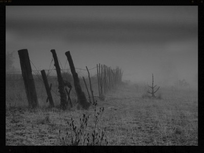 Ranch Fence Row Heavy Fog B/W
