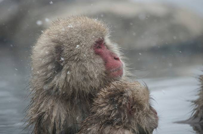 _DSC1271 by TheoShilton - Winter Wildlife Photo Contest