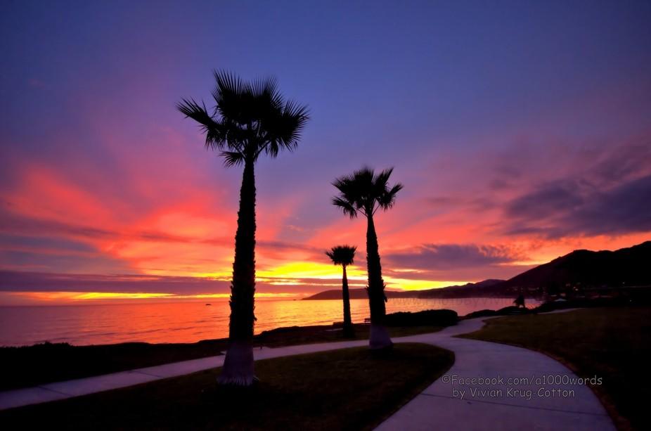 A FB z shell beach palm tree sunset VIV_8451 -1