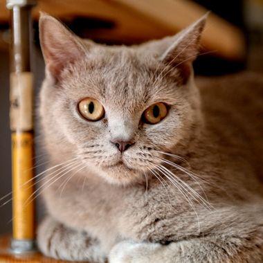 IMG_4218_5091_CAT