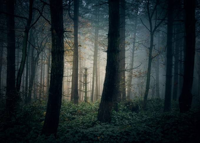 A place of safety? by CPF_Photography - Dark Forest Photo Contest