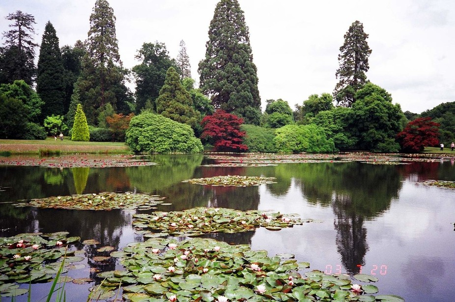 Sheffield Park Gardens in July
