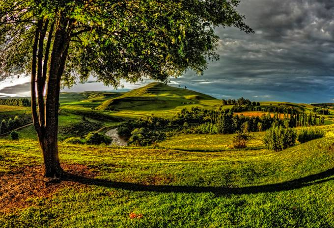 VIEW FROM THE TREE by joannegraham - Meadows Photo Contest