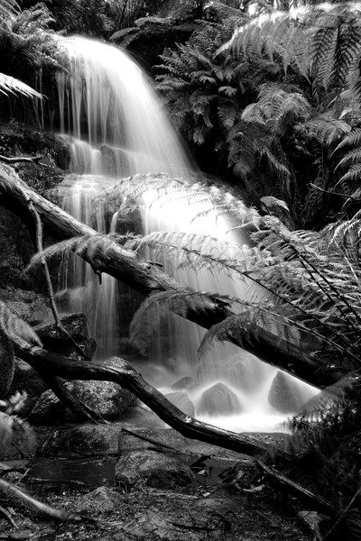 Fern Tree Falls, Mt. Buangor State Park B&W