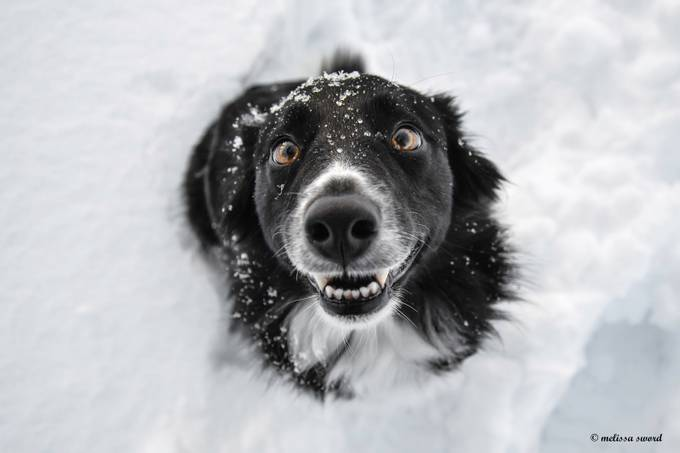 FEELING AMUSED by MelissaSword - Happy Moments Photo Contest