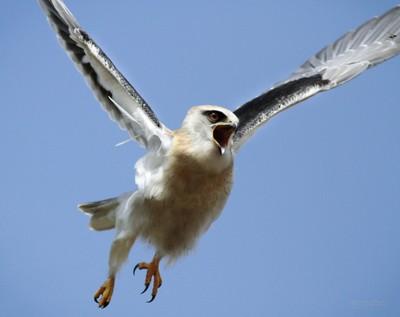 Real Angry Bird