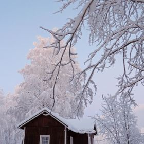 Old Farm House by Frozen Birch Trees