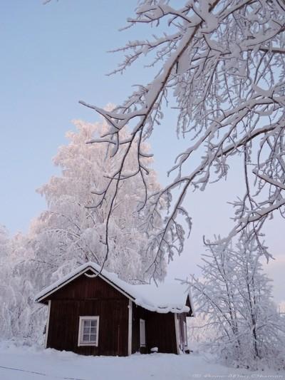 Old Farm House by Frozen Birch Trees