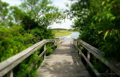 Assateague Island, Maryland