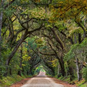 Botany Bay Road is the main route into the Botany Bay Plantation and Wildlife Preserve on Edisto Island, SC. Once the home to several old plantat...