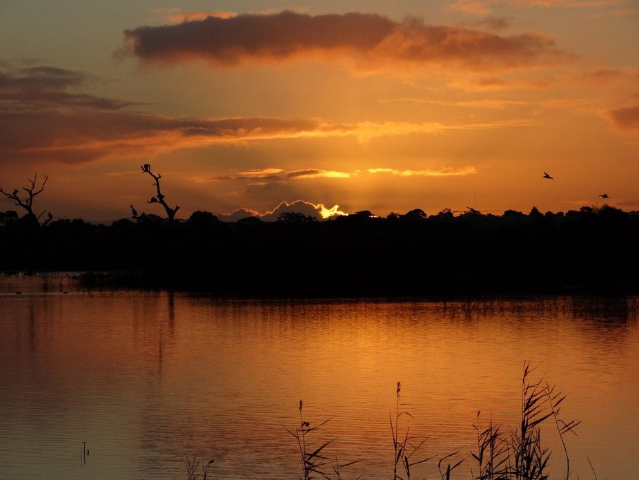 This was captured at sunset at Braeside, a wonderful wetland park near Melbourne where one can ob...