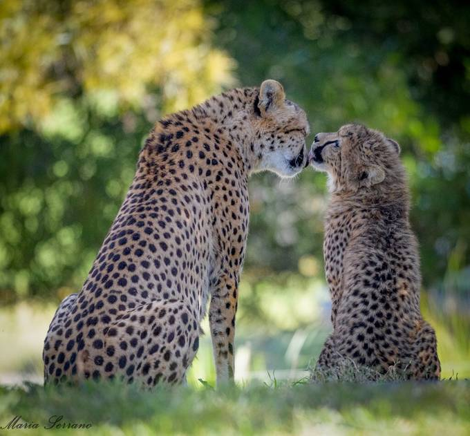 Child's Kiss by mariaserrano - Happening At The Zoo Photo Contest