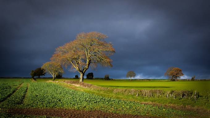 Storm Tree by emmadrabble - Meadows Photo Contest