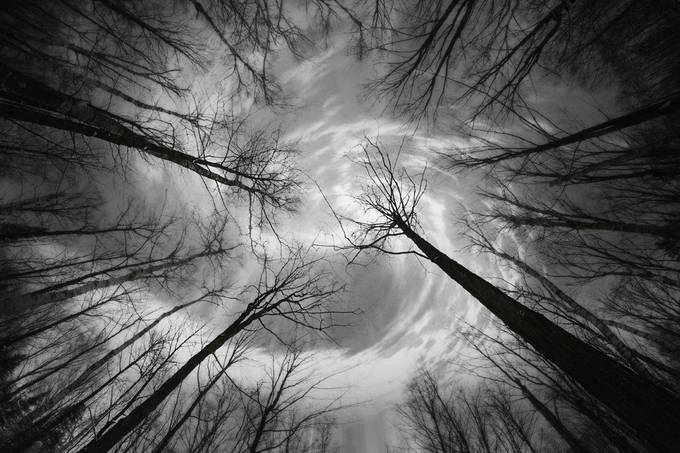 Skyward by KunstFabrik - Silhouettes Of Trees Photo Contest