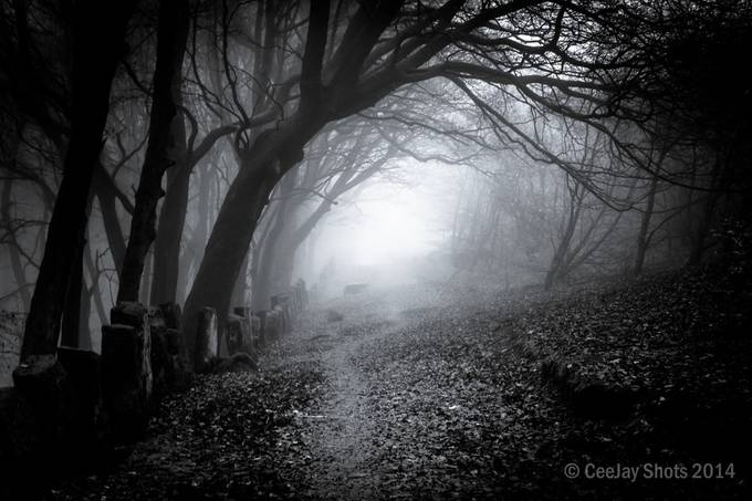the chevin2-46 by CeeJay - Dark Forest Photo Contest