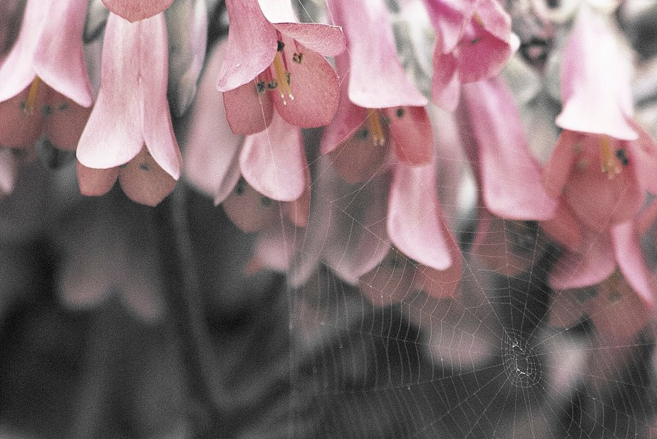 Blooms & Web