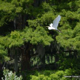 Avery Island, South Louisiana.