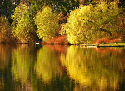 Cranberry Lake Reflections