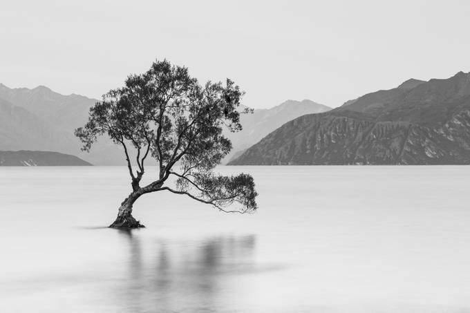Lone Tree of Wanaka by SebastianWarneke - A Black And White World Photo Contest