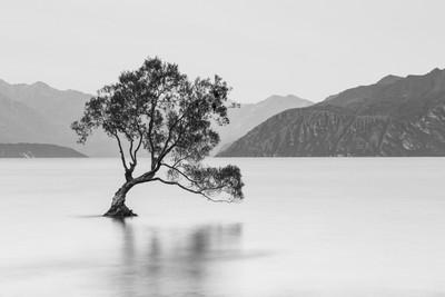 Lone Tree of Wanaka