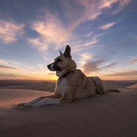 The General rests atop Kelso Dunes in the Mojave Desert. Roughly 1hr 30 min walk through small dunes to the main dune, then another 1hr up the pe...