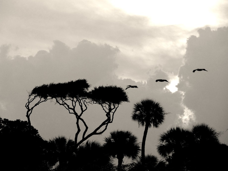 This photograph consists of merely trees, birds, and clouds. Despite this relatively barren palet...