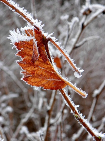 Icy Grip of Winter