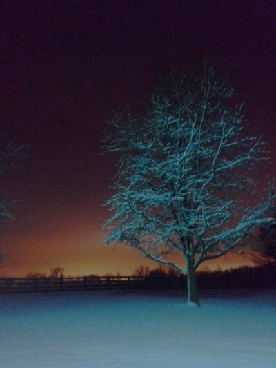 Bluegrass Winter Daybreak