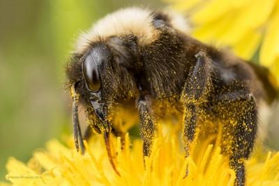 Bublebee