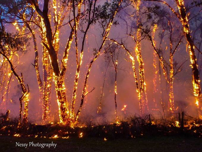 Burning Trees by Rangerness-PV - Shooting Fire Photo Contest