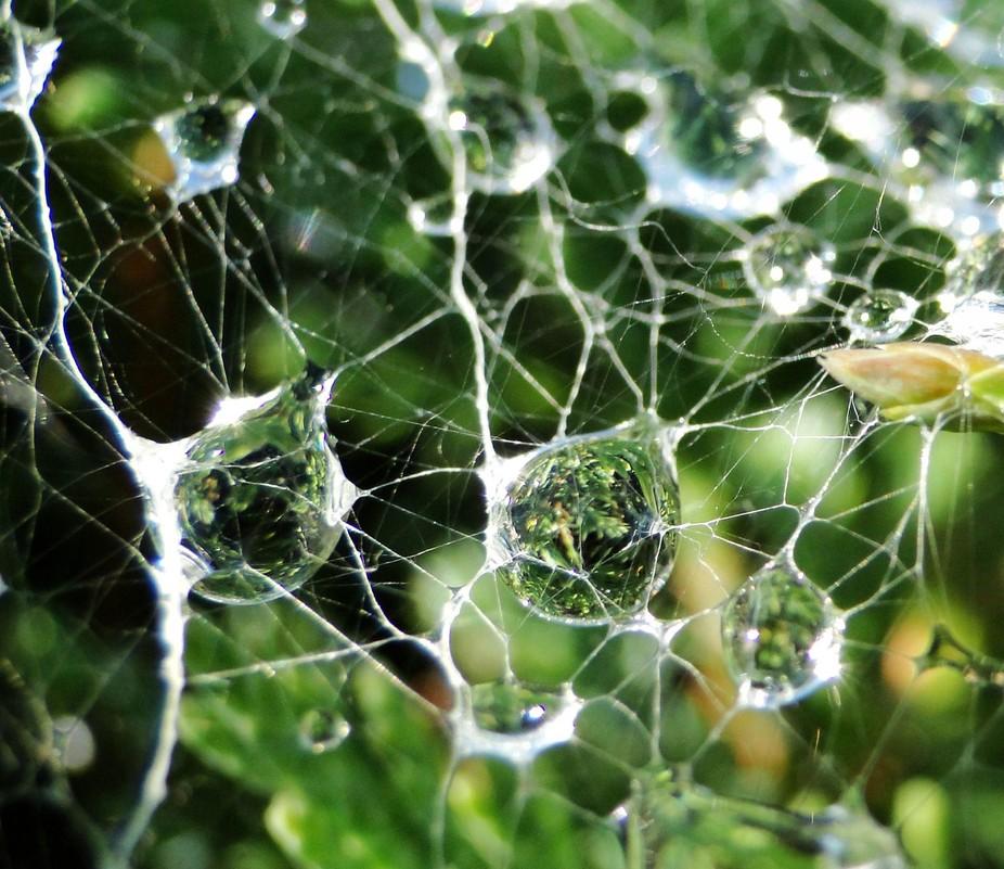 Spider Droplets 2