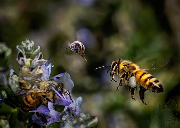 Busy Bees by ntgreen - Disrupting Depth Photo Contest