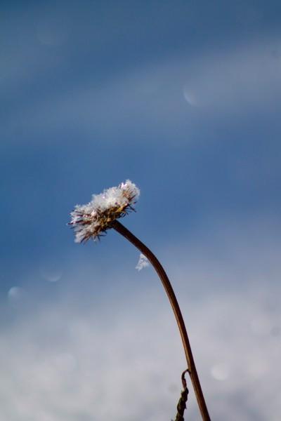Snowflake fairy dust