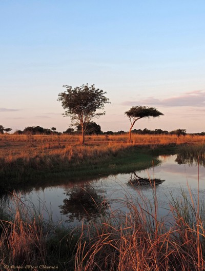Late Afternoon Calm by a Waterhole