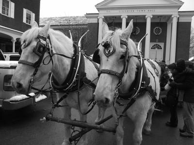 Horses @ Liginoer Pa Ice Festival