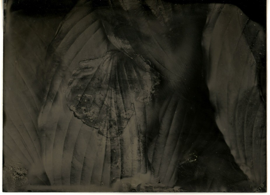 Untitled Collodion