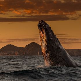 We went out at sunset just west of Land's End in Baja California Sur, Mexico to photograph whales and after dark, listen to their song with a hyd...