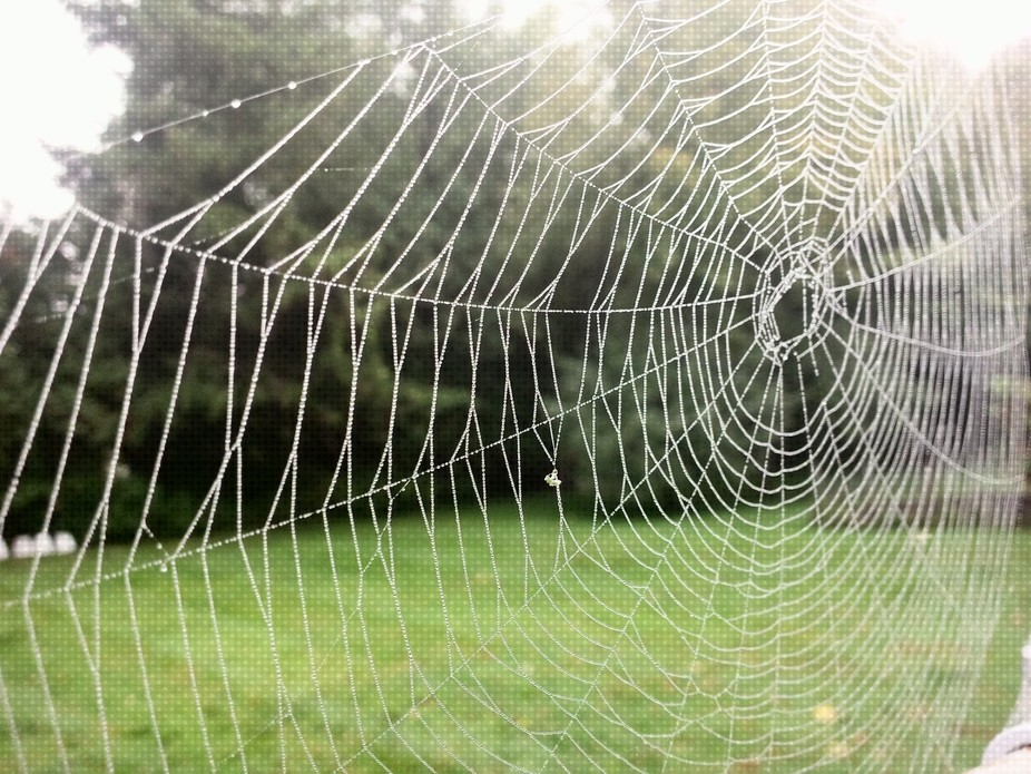 Spider web cottage