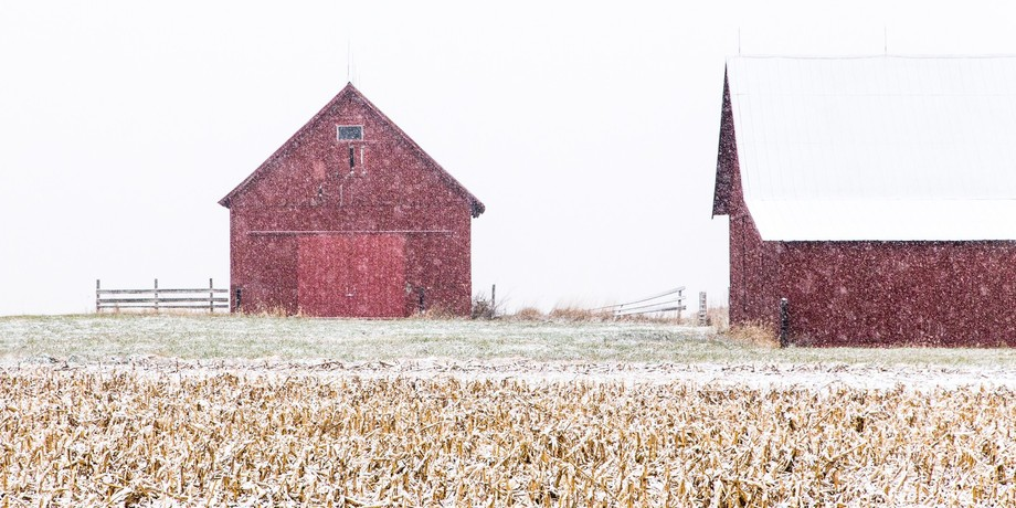 Rural Indiana.  Barns with stubble of corn fields in the foreground.