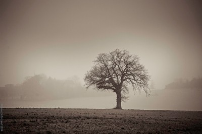 sepia-lone_tree