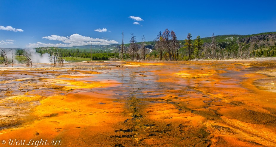 colorful bacterial mats in a hot spring in Yellowstone National Park