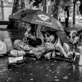 Homeless man playing guitar to feed himself and his pets, under the rain during late autumn in Sydney, Australia. It's amazing what some people w...