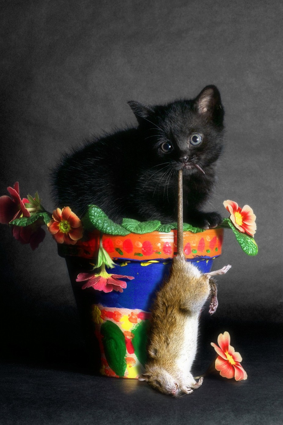 Rat Cat by Billyboy - Kittens vs Puppies Photo Contest