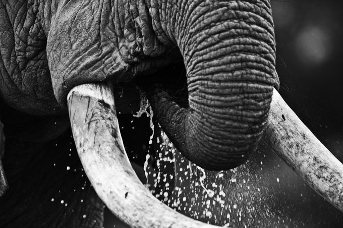 thirsty by kasper - Monochrome Creative Compositions Photo Contest