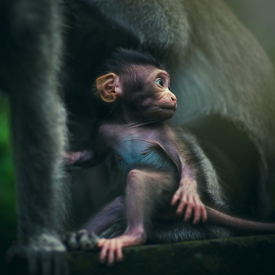 Youth by laansanh - Monkeys And Apes Photo Contest