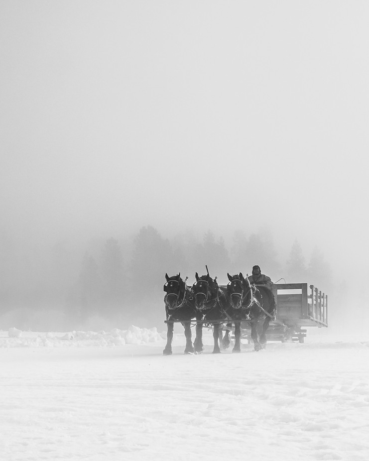 Sleigh Horses by GeoffColeImages