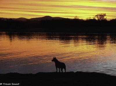 Tropical qld Sunset-2