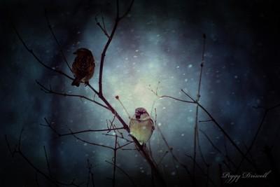 Birds on snowy day