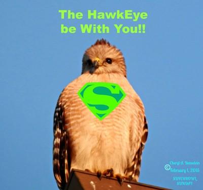 Super Bowl Hawk Eye