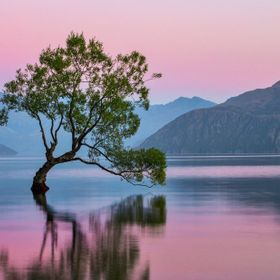 This tree in Lake Wanaka is the common postcard content for the town! Not only that, but an elderly gent here in our hostel just told me it's the...